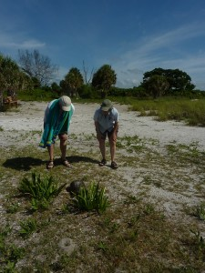 Observing-Gopher-tortoise-with-Dr-Peter-Pritchard