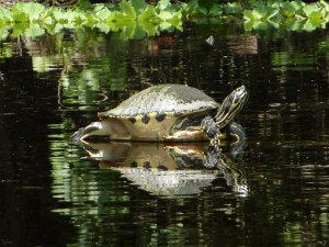 Turtle spotting while canoeing in Springs near Orlando