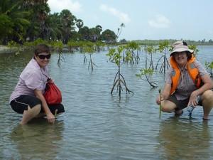Planting mangroves at Kalpitiya, Sri Lanka.